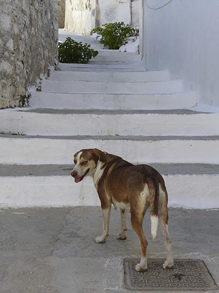 le chien de filoti 2