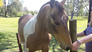 Splash Pony