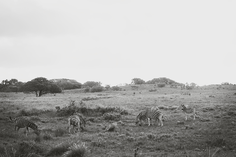 Sydafrika dag 9