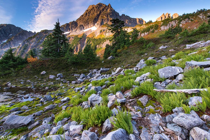 Morning glory - North Cascades National Park