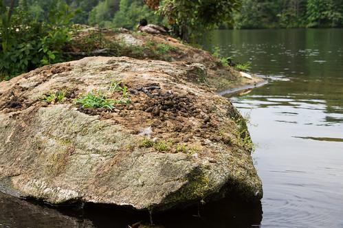 Duck Poo Island