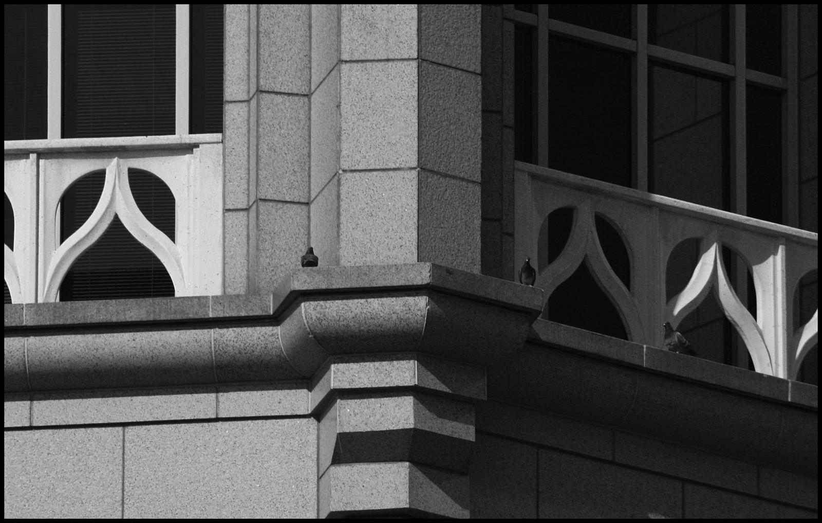 2007midtownpigeons