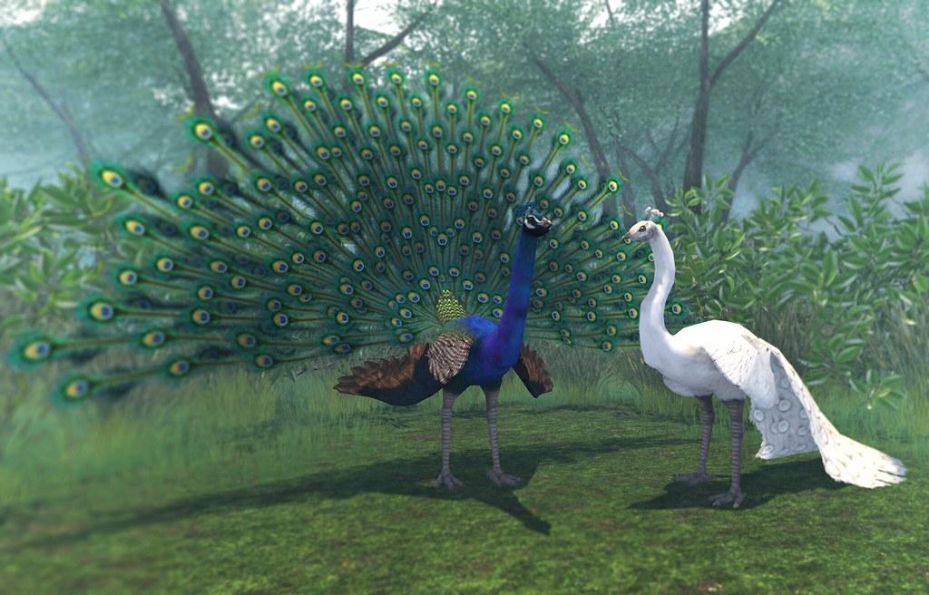 JIAN Peacocks @ COLLABOR88