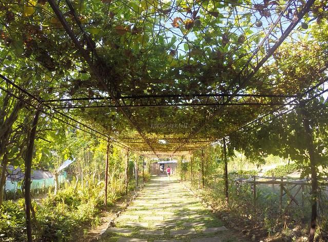 the farmhouse aloguinsan cebu