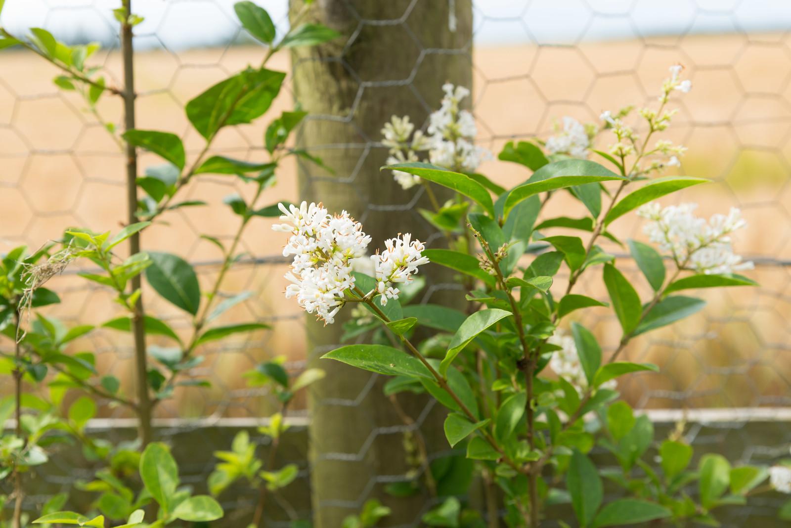gardenjuly1