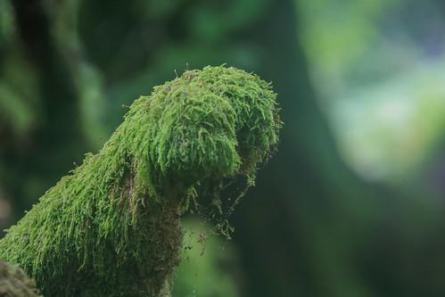 Parque Natural de #Gorbeia #DePaseoConLarri #Flickr - -882