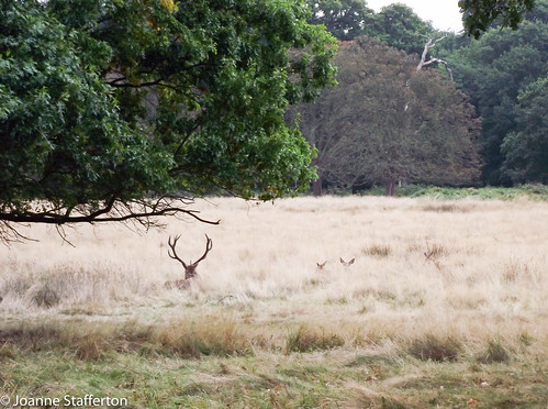 Richmond Park October 2016