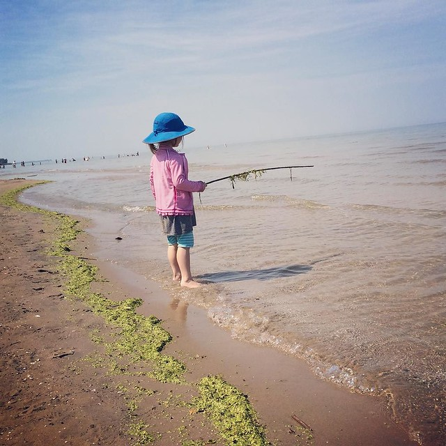 "Fishing for ""seaweed""."
