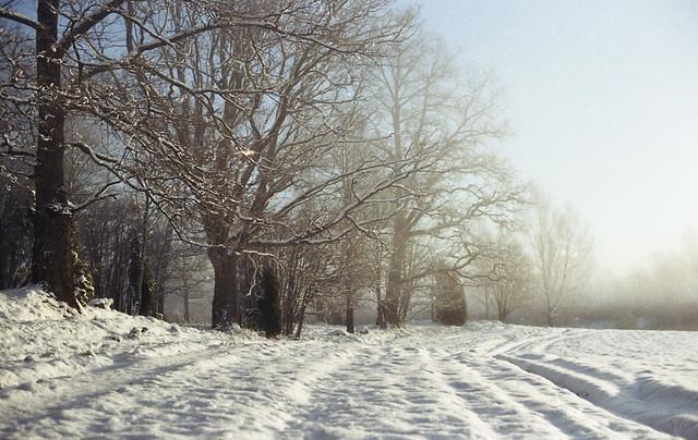 oaks, december 2014