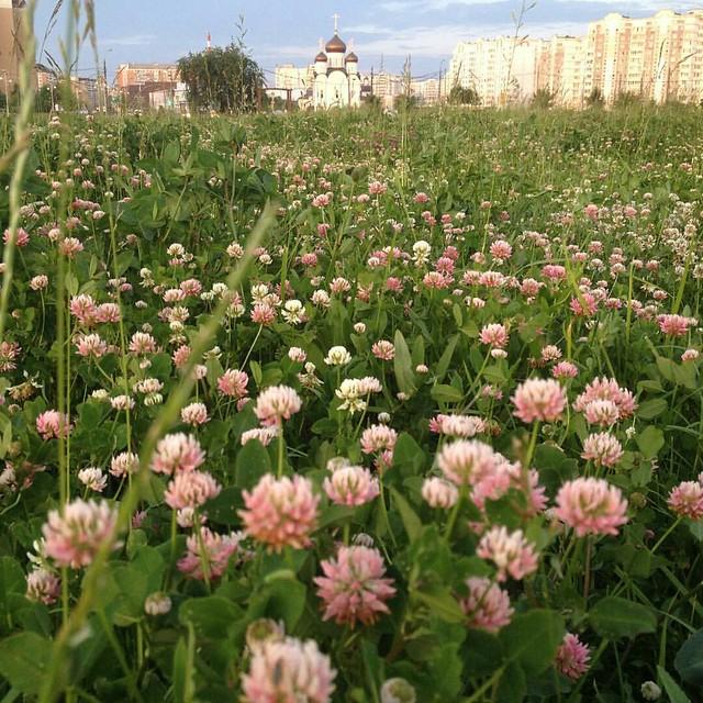 flower_cover