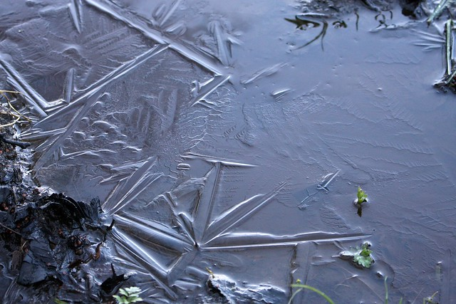 Patterns of frost I