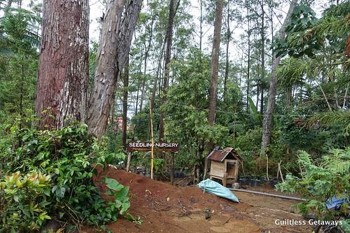 binahon-agroforestry-farm.jpg