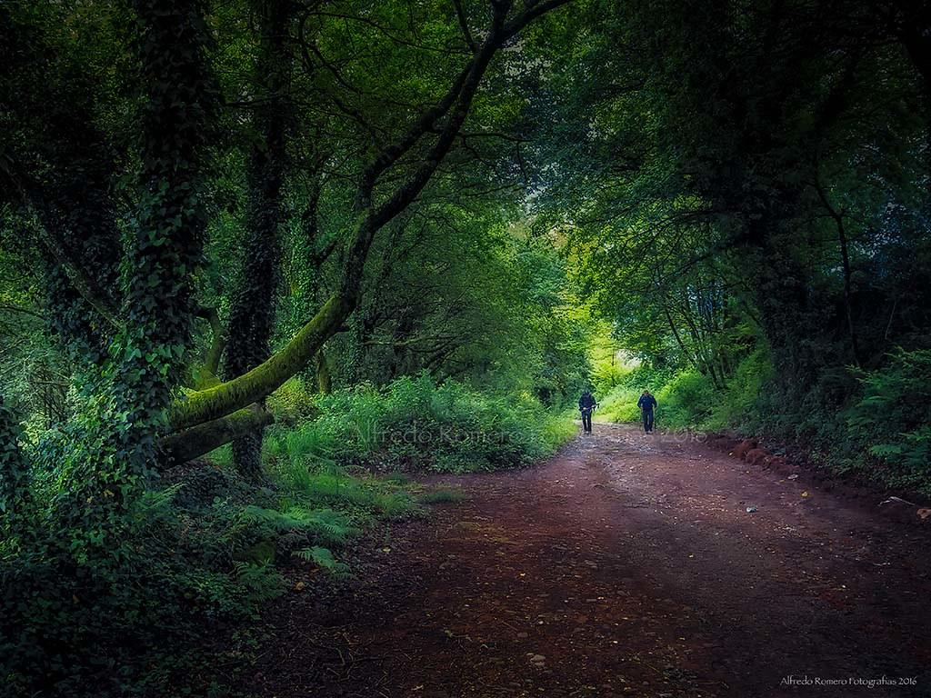 Camino 2016 -  Bosque