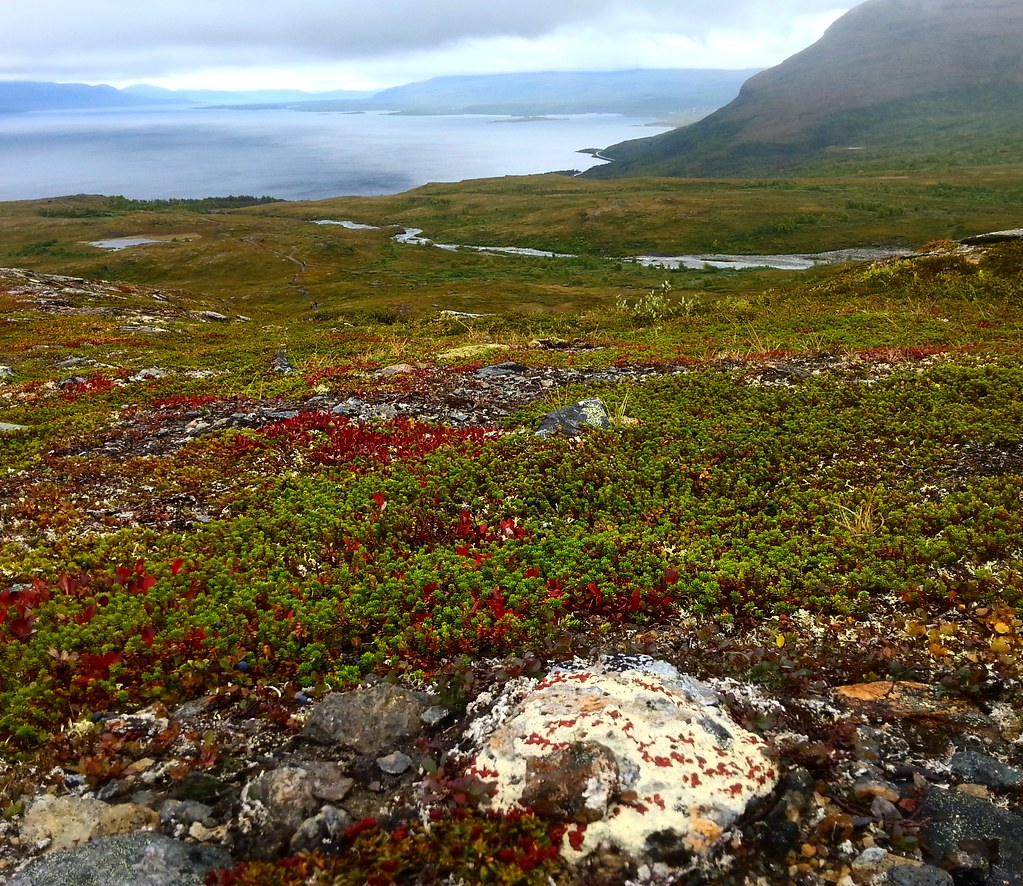 A Little Heaven Called Björkliden – Autumn Excursion in Swedish Lapland | Live now – dream later travel blog