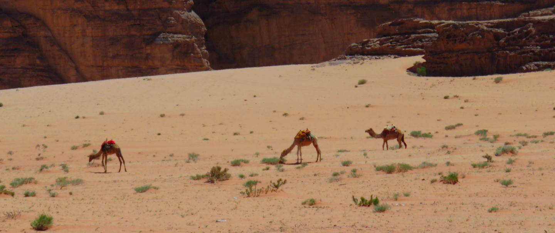 Qué ver en Wadi Rum: Desierto de Wadi Rum en Jordania qué ver en wadi rum - 28007329050 93b7fcbb8e o - Qué ver en Wadi Rum, Jordania