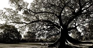 Tree Mendous