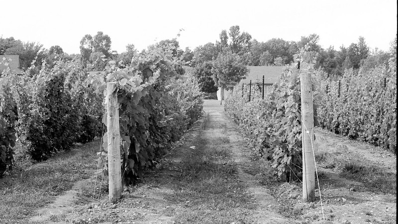 Sandbanks Vineyards