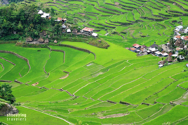 Batad Rice Terraces showing the small village at the bottom of the bowl