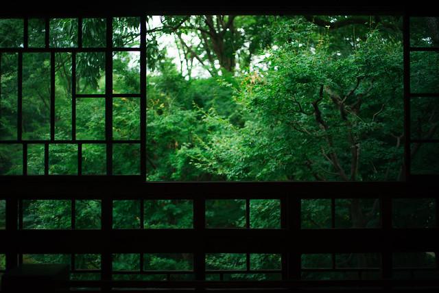 緑の見える窓