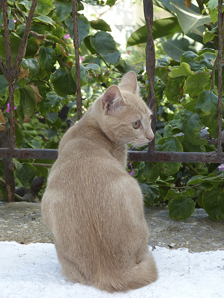 chat beige