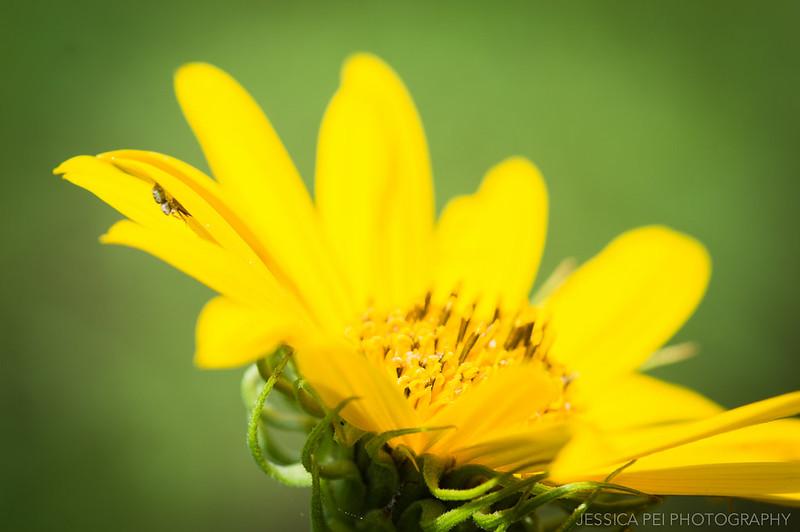 Arbor Hills Nature Preserve Flower