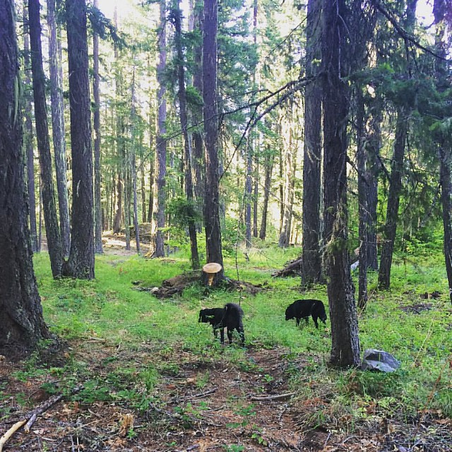 Forest dogs. 🌲