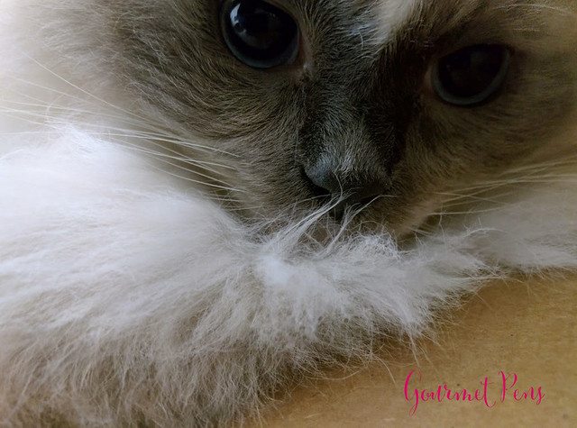 Whiskers & Paws April 2017 Edition 1