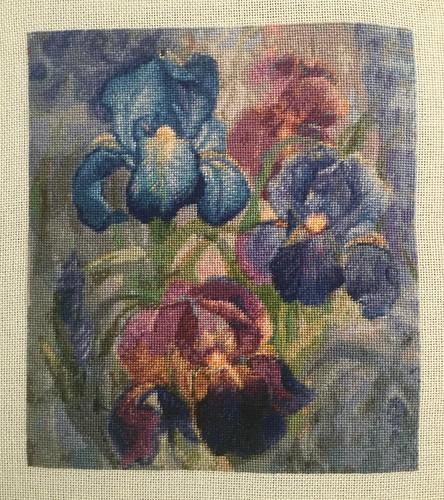 QS Iris by HAED