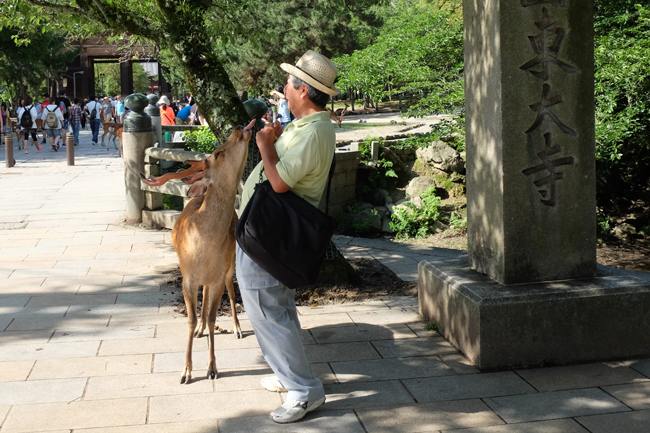 trained deer at nara
