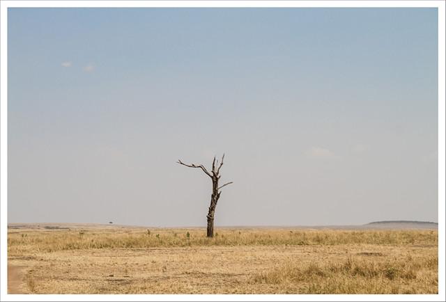 MasaiMara-133
