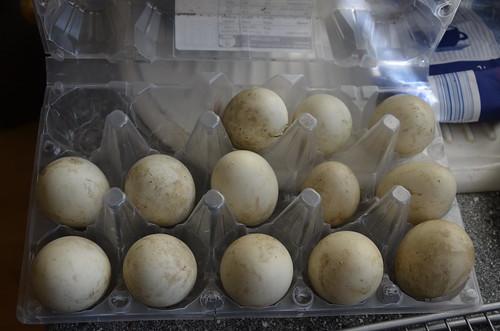 eggs July 16