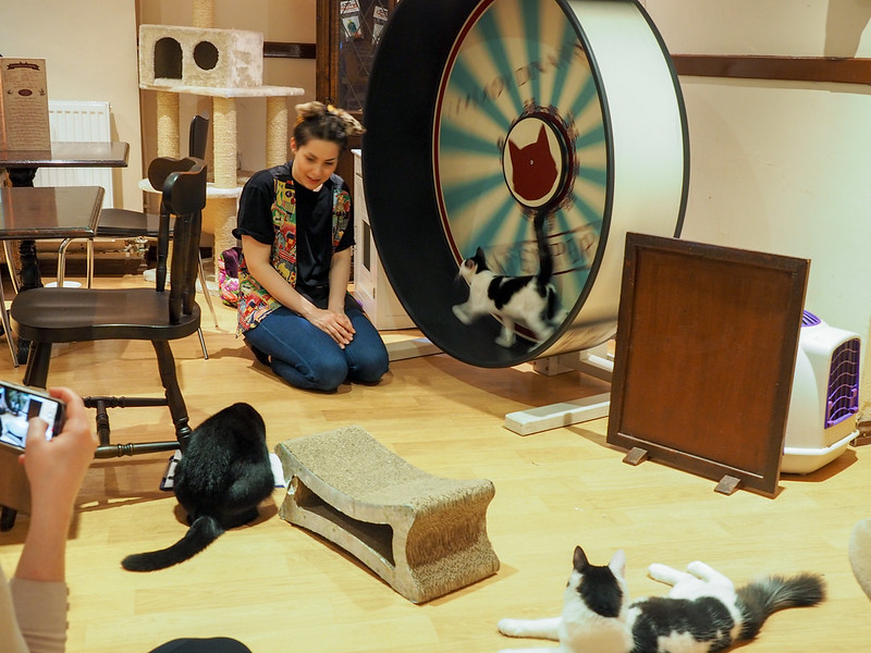 Playtime at Lady Dinah's Cat Emporium