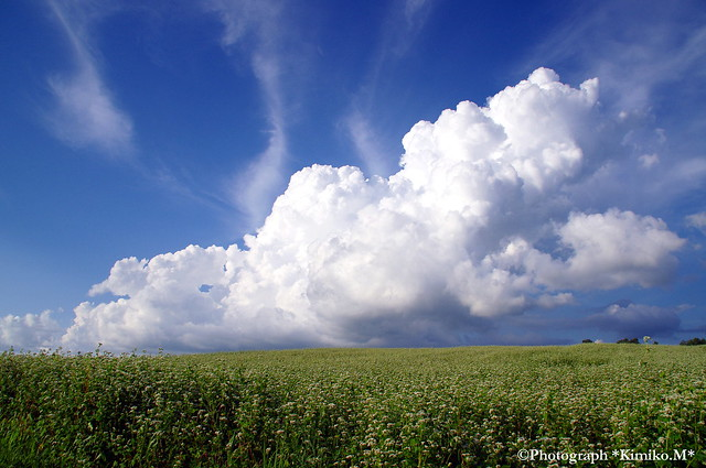 蕎麦畑の入道雲