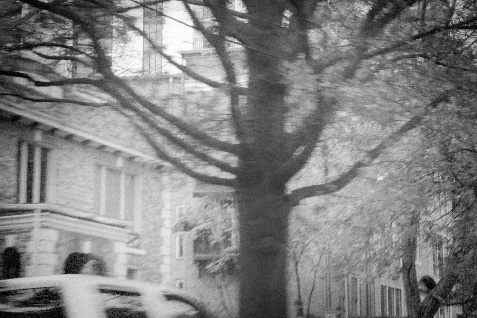 Piedmont Ave Tree near Piedmont Park, Atlanta, Georgia, 2014