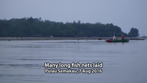 Multiple long fish nets laid at Pulau Semakau