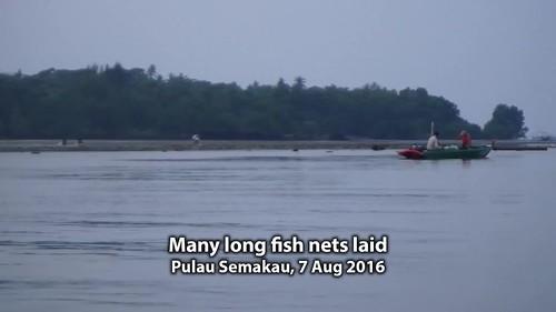 Multiple long fish nets laid at Pulau Semakau