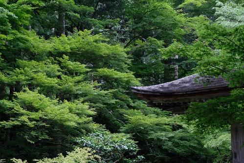 京都大原三千院には、恋につかれた女はいなかった!?