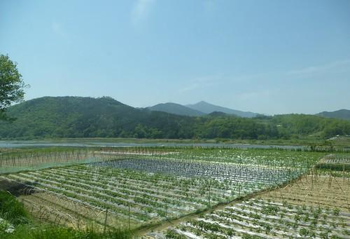 c16-Jeonju-Jinju-route (34)