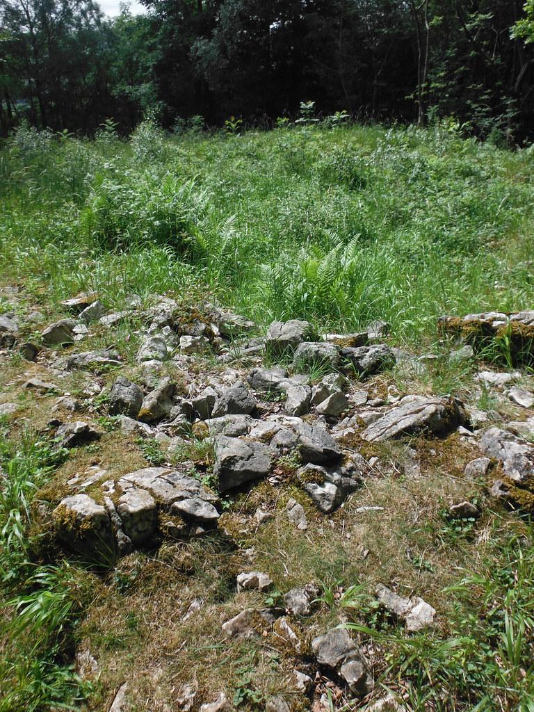 Grass Woods 5