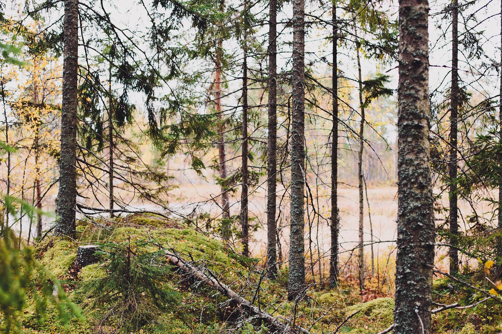 Skogspromenad Hälsingland - Evelinas Ekologiska