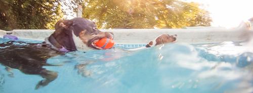 GoPro Pool-8751