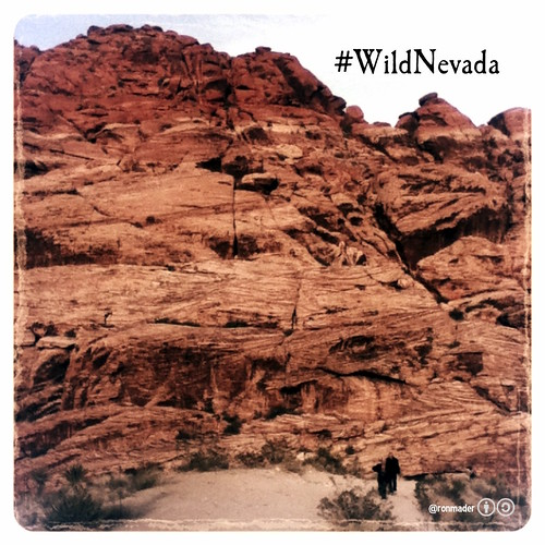 As wild as you want to be #WildNevada