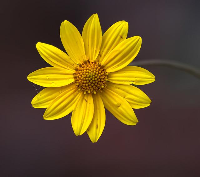 Flower-3-7D1-_092016