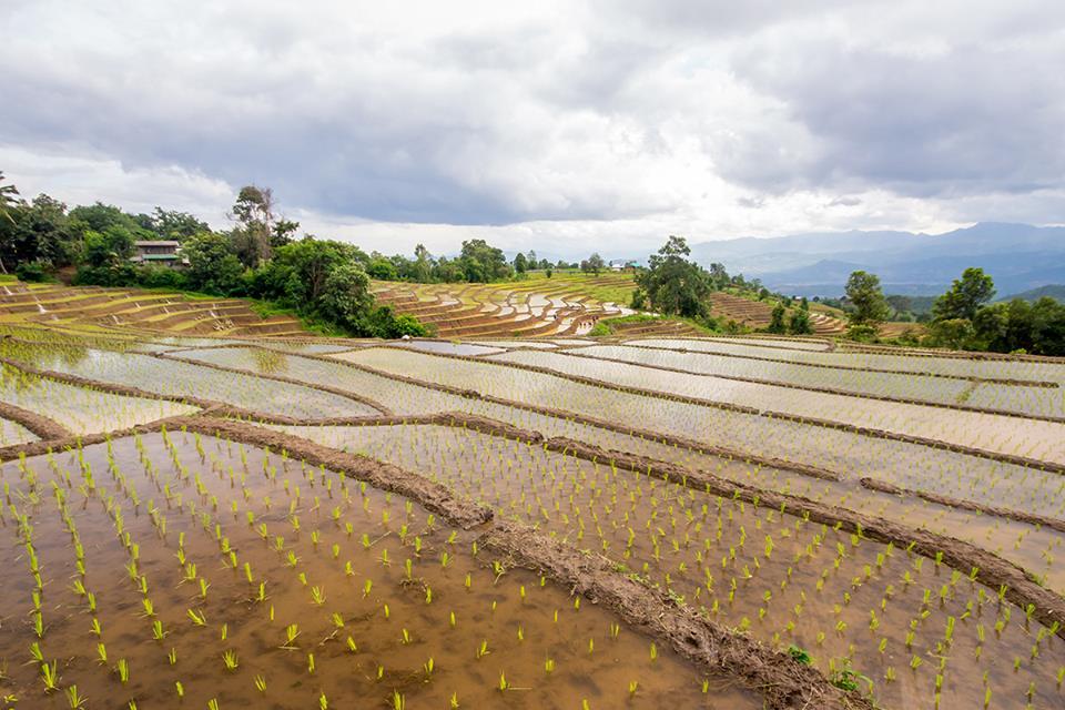 Chiang Mai (13)