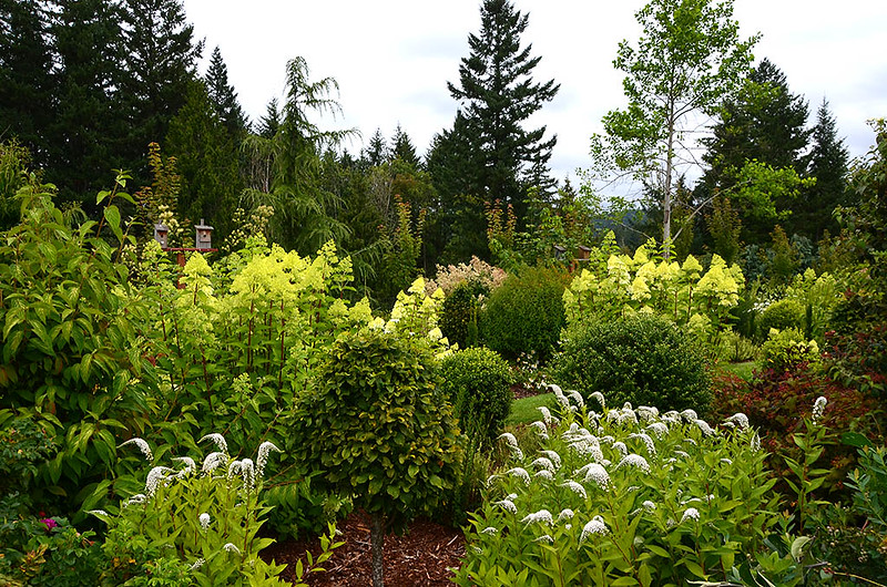 Laurel Hedge Gardens (Estacada, Oregon)