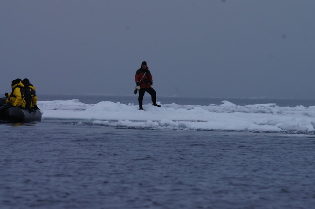 In the Sea Ice