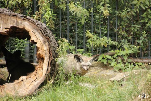 Besuch Tierpark Friedrichsfelde 07.08.1646