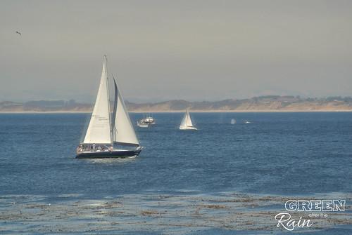 160703f Monterey Bay Aquarium _107