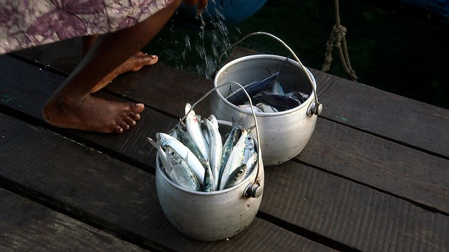 Fish in pots, Solomon Islands. Photo by Wade Fairley