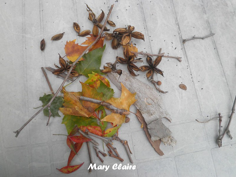 foglie rametti semi